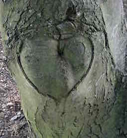 About therapy. tree heart